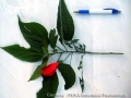 indentication process of medicine plant.jpg